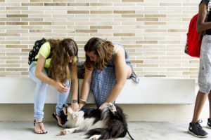 Comforting Canines (3)
