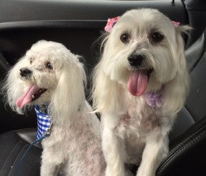 Keisha Armistead's pets Sprocket and Klutchiz